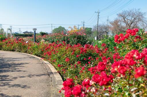 장미 정원의 풍경