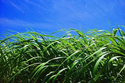 Kusomi Koen that fly in summer blue sky # 8
