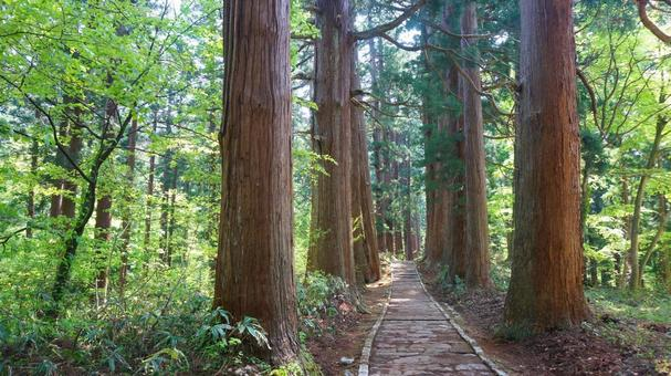 Sugi tree-lined road leading to the shrine