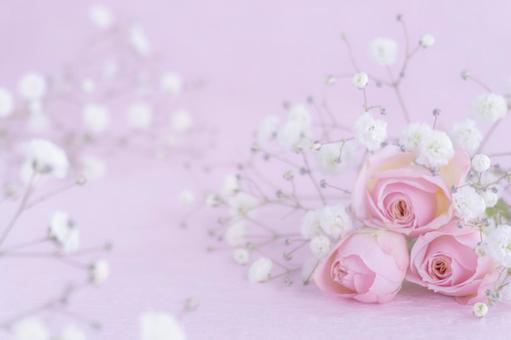 Pink roses and gypsophila background