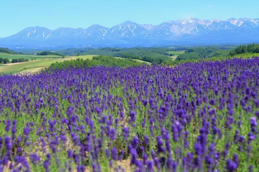 Lavender and Tokachidake mountain range
