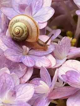 片栗和繡球花