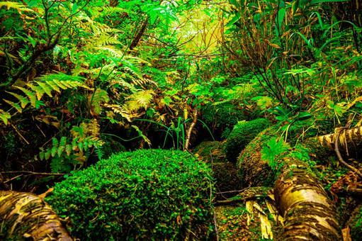 原始森林(第3部分)搜索詞/原始森林創建者姓名/YUTO@PHOTOGRAHER