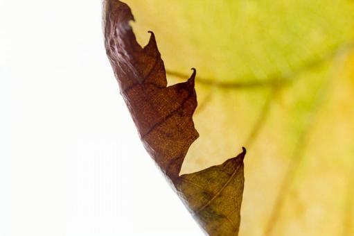 낙엽 잎 시설 8