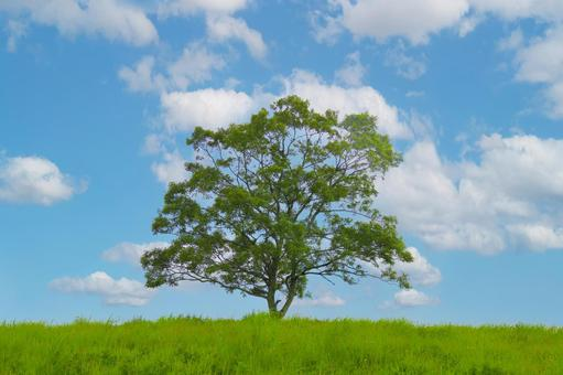 Blue sky, meadow and one tree 2 background background