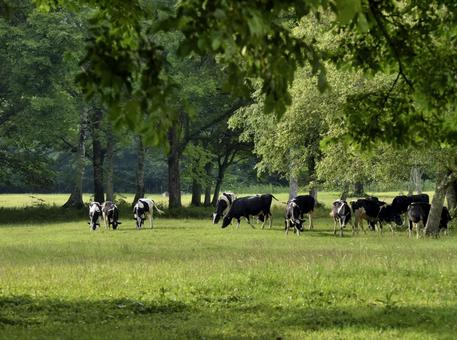 Highland ranch and cows surrounded by greenery