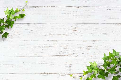 배경 나뭇결 질감 아이비 프레임 녹색 자연 흰색 나무