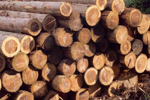 Sawmill logs