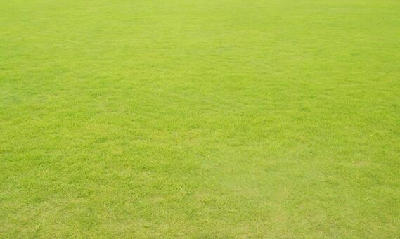 Lawn_background_48