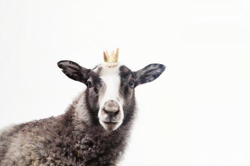 Crown crown 3