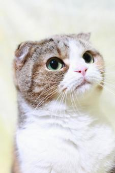 Tiger cat 6