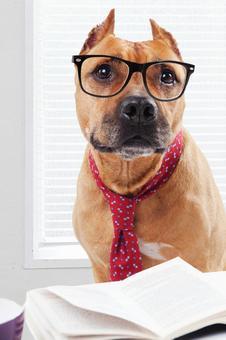 Businessman's western dog