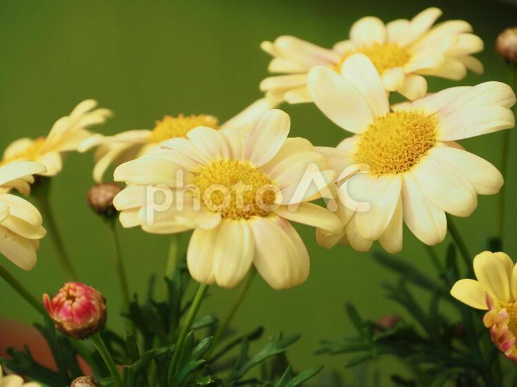 黄色い春の花の写真