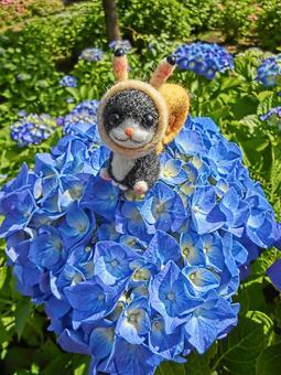 蝸牛貓和八仙花屬7