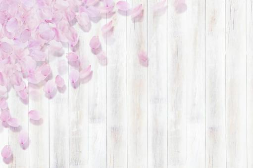 벚꽃의 꽃잎 _ 하얀 나무 판자 _ 배경 소재