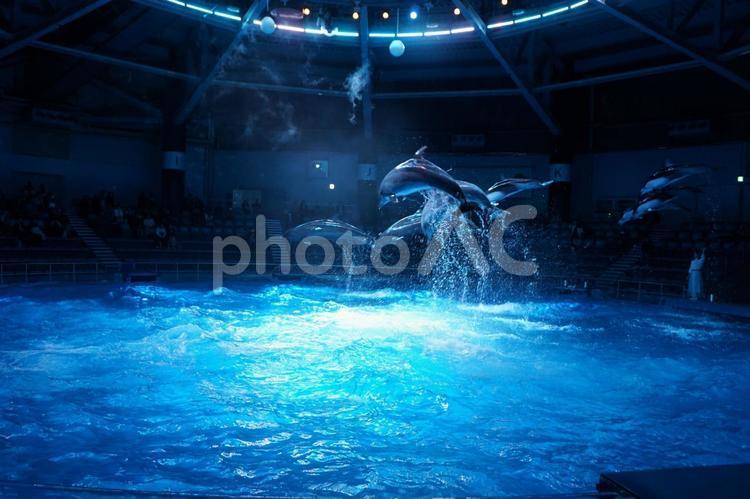 イルカショーの写真