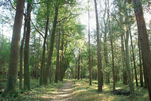 Trees_forest_115