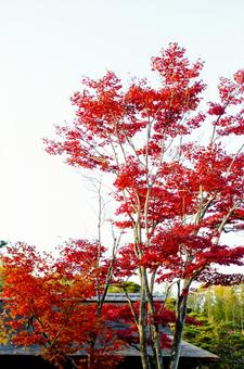 Fall scenery 27