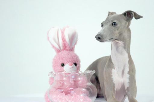 狗和兔子毛绒