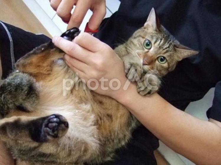 爪切りされる猫の写真