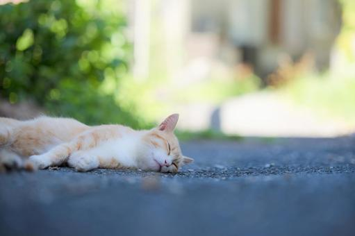 Cat taking a nap