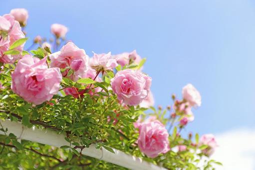푸른 하늘과 장미