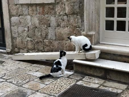 Cats staring at each other | Backstreets of Dubrovnik, Croatia