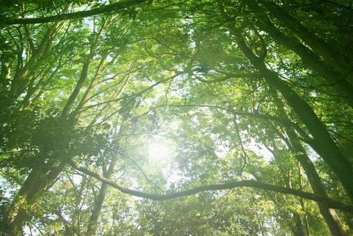 Trees_forest_126