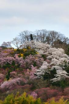 花見山 공원