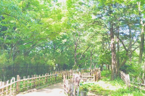 Green promenade watercolor style
