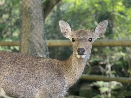 Deer in the mountains 3