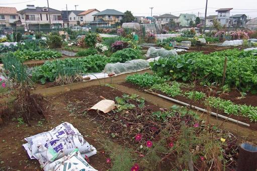 Home garden # 1