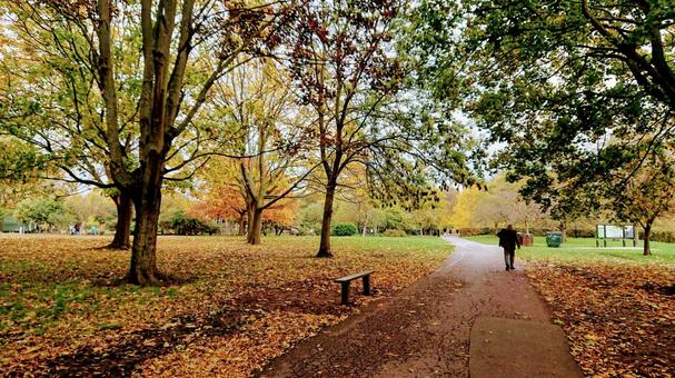 British park in autumn and old man autumn leaves