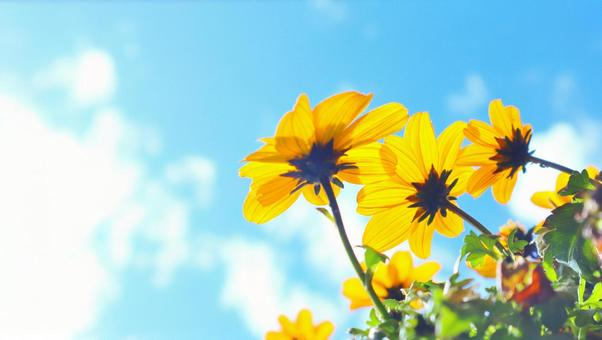 Background texture that imagines the future of hope of flowers shining toward the sky