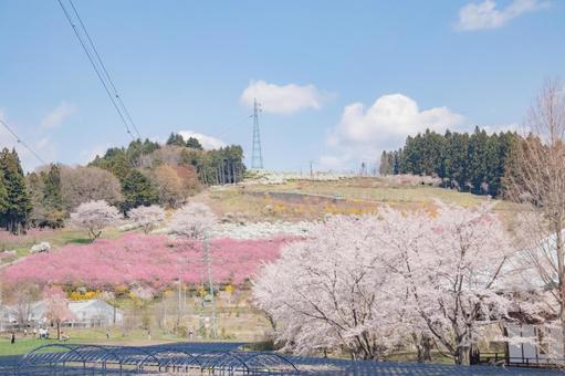 Spring hill