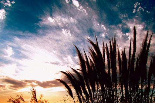 Reed silhouette and sunset sky