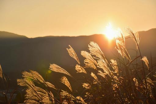 Autumn dusk and pampas grass