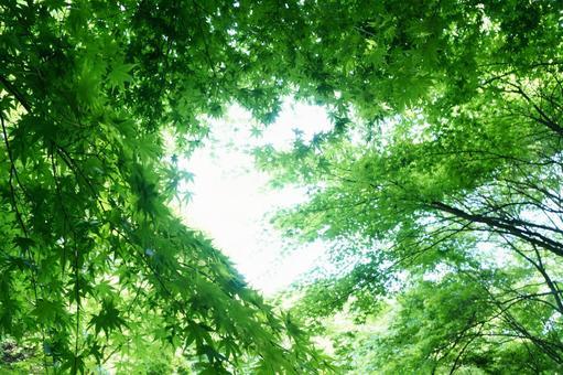 Fresh green 1