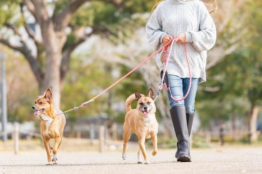 화창한 날 공원을 산책하는 강아지와 젊은 여성
