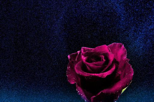 A rose floating in the drizzle at midnight