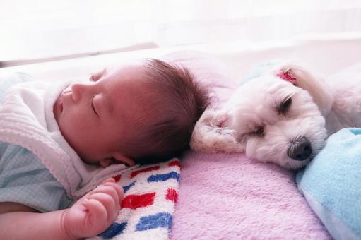 馬爾波和嬰兒