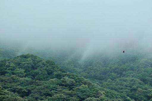 山霧 신록