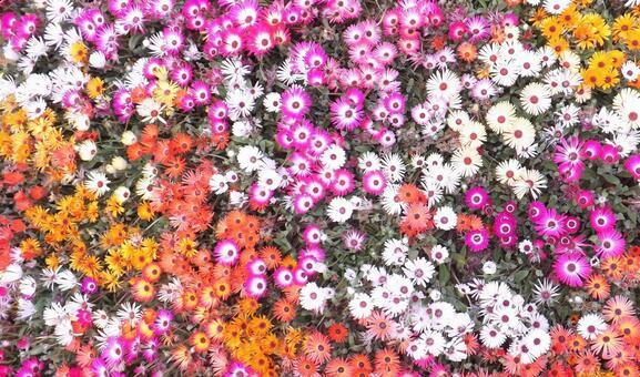Flower velvet-1_Carpet of flowers