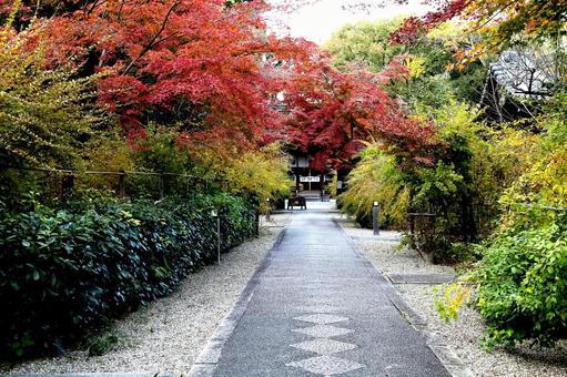 Kyoto Autumn leaves Nashinoki Shrine