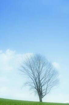 Philosophy tree