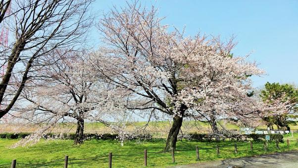 Sakura Shonai Footprint Park Nishi-ku Nishi-ku