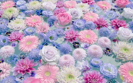 淡色的花朵漂浮在水面上。大麗花、玫瑰、洋桔梗、媽媽、中提琴、非洲菊、scabiosa