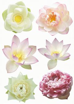 Cut out material lotus set