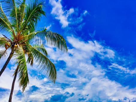 Tropical blue sky, white clouds and palm tree