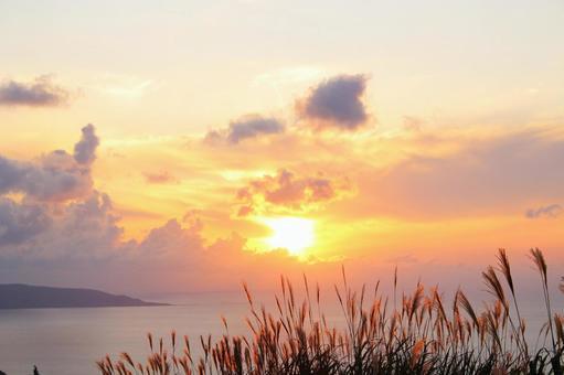 Golden pampas grass, sky and sea 3